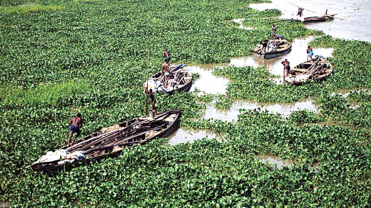 Weed Hampers Water Transport In Lagos