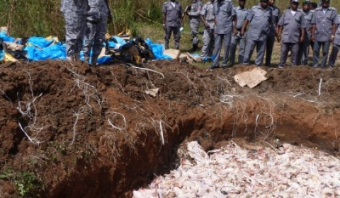 Customs Service Destroys Over N90m Worth Of Poultry Products