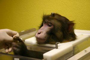 monkey_implants