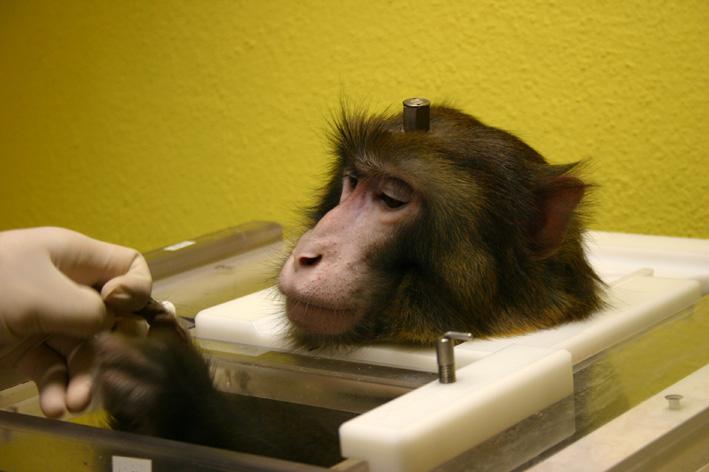Brain Implants Allow Paralysed Monkeys To Walk