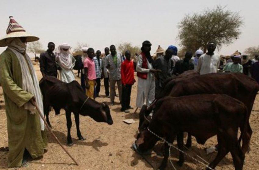Herders' registration begins, NGF, Miyetti Allah back Akeredolu's Order.