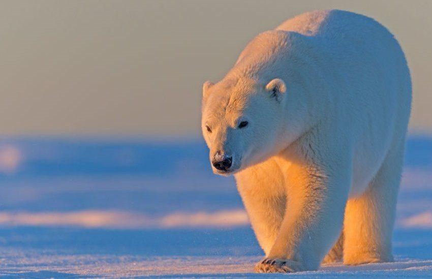 Biden To Suspend Trump Arctic Drilling Leases
