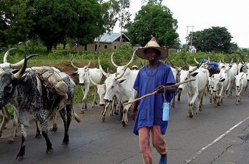Herdsmen in Delta state reject 5,000sqm Grazing Land proposed by Lawmakers, want at least 30,000 sqm for each Local Government.