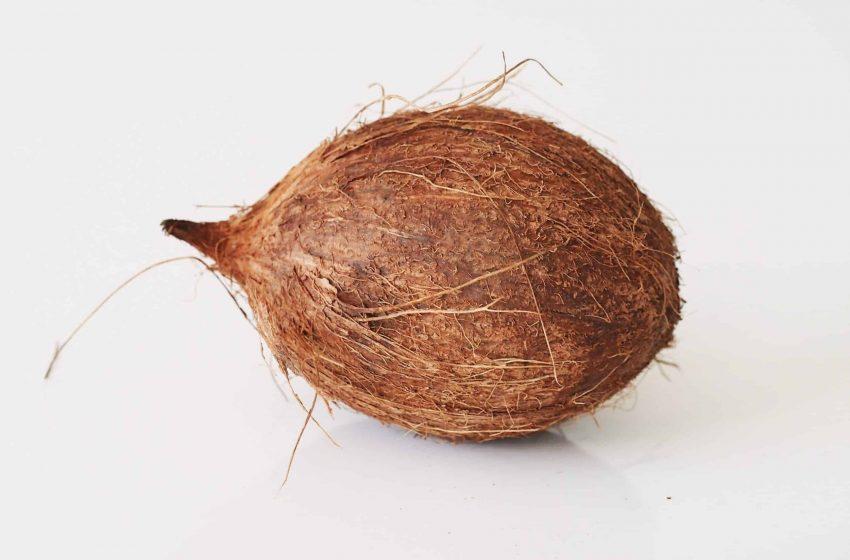 LASG PARTNERS FAO TO REHABILITATE COCONUT BELT